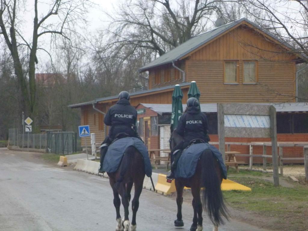 krásný holky na koních