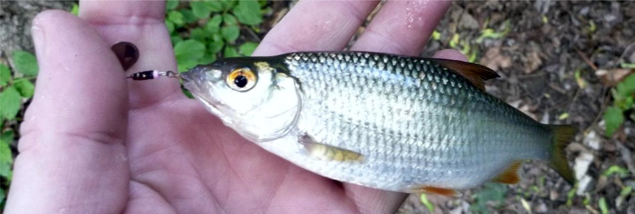 Bílá ryba na vláčku?